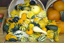 Gourds Falling Out Of A Basket...