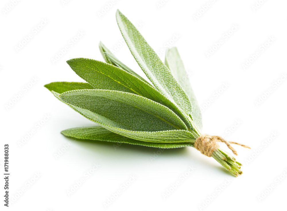 Fototapety, obrazy: Salvia officinalis. Sage leaves.