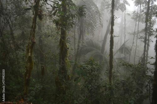 Stampa su Tela Nebelwald am Cerro Chirripó, Costa Rica
