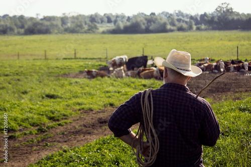 Fotografie, Obraz  пастух в шляпе на пастбище с коровами