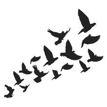 Birds. Vector Illustration. Isolated.