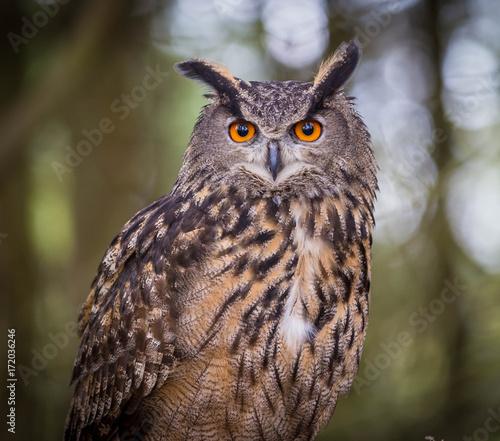 Deurstickers Uil Eurasian Eagle Owl