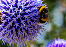 A Bee And A Wasp Visit A Blue ...