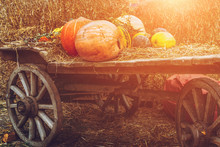 A Lot Of Pumpkins On Rustic Wo...