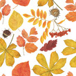 Watercolor painting autumn seamless pattern with yellow, red leaves and rowan berries