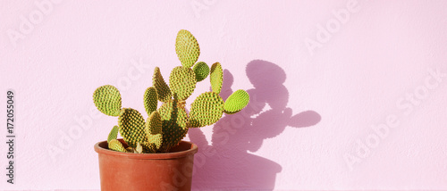 Poster Cactus Green cactus in a flowerpot on a pink background