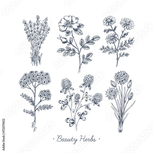 Photo  Hand Drawn Vintage Beauty Herbs
