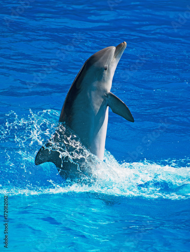 Dolphin having fun in clear blue sea. Place for text.