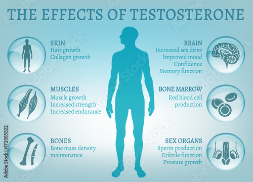 Photo Testosterone Effects Infographics