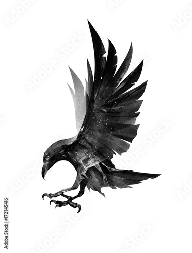 Photo  drawn flying bird Raven on the side on white background