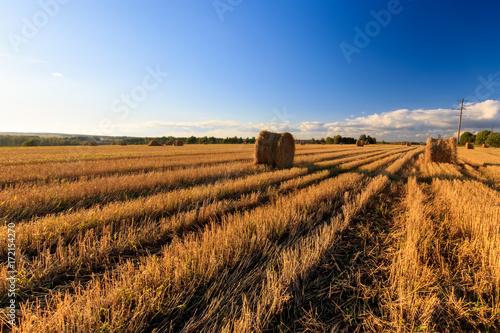 Spoed Fotobehang Weide, Moeras Haystacks on the field in Autumn season.