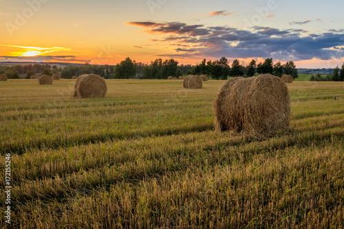 Fotografie, Obraz Haystacks on the field in Autumn season.