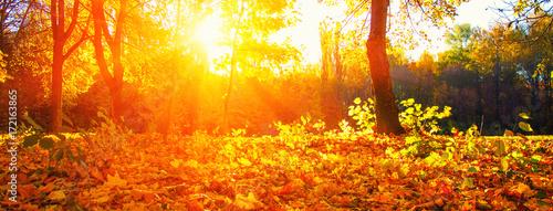 Spoed Fotobehang Meloen autumn trees on sun