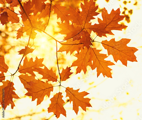 autumn-leaves-and-sun