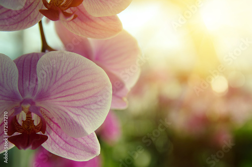 Orchid flower in garden