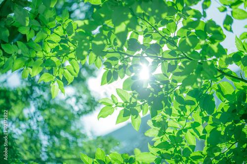 Poster Natuur ecoイメージ