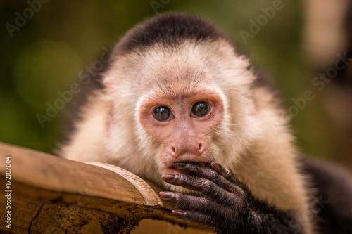 Portrait eines jungen Kapuziners der sich die Hand vor den Mund hällt Wallpaper Mural