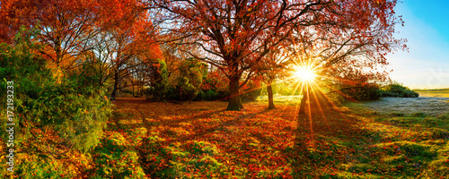 Fototapeta Wonderful autumn landscape with bright sun, colorful trees and wide meadows obraz