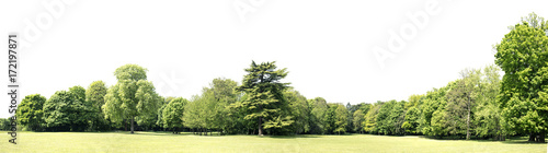 Poster Blanc High definition Treeline isolated on a white background