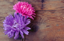 Two Aster Flower, Pink And Purple