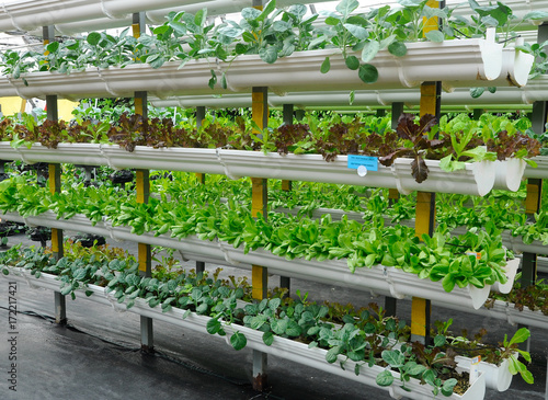 Fotografie, Obraz  Vegetables are grown using fertigation system