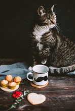 Taking The Breakfast With One-eyed Cat