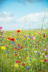 Naklejka Na lodówkę wild_flowers