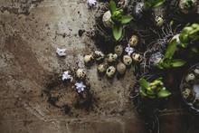 Quail Eggs And Hyacinth