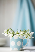 Snowdrops In A China Cup