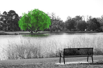 Fototapeta Czarno-Biały Green tree in black and white landscape scene with an empty park bench overlooking the water