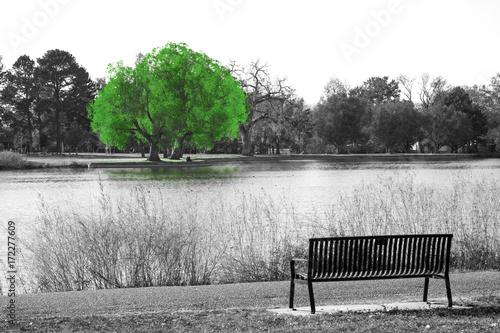 zielone-drzewo-w-czarno-bialej-scenerii-krajobrazu