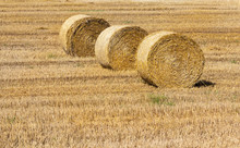 Hay And Agriculture Farm