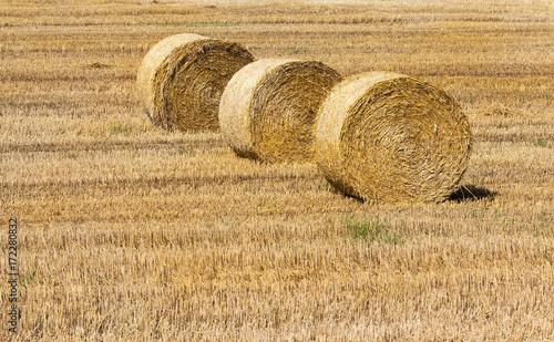 Fényképezés  Hay and agriculture farm
