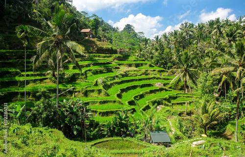 Pinturas sobre lienzo  Beautiful rice terraces in the morning at Tegallalang village, Ubud, Bali, Indonesia