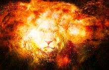 Lion In The Cosmic Space. Lion...