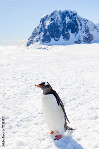 Staande foto Antarctica Antarktis, Südlichster Punkte der Reise - Gipfelbesteigung in der Antarktis - Naheaufnahme eines Pinguins