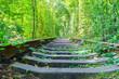 Leinwanddruck Bild - Railway road in forest