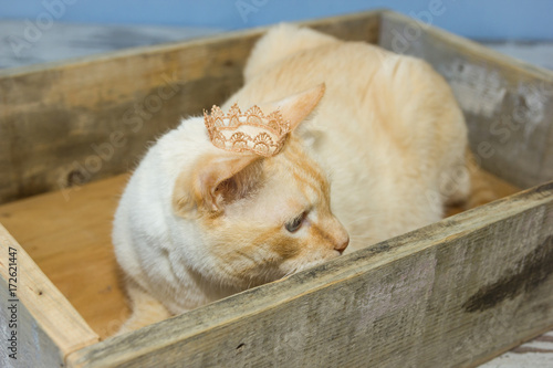 Fototapeta Thai cat wearing crown sits in wooden box obraz na płótnie