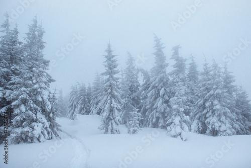 Foto auf AluDibond Rosa hell Fantastic winter landscape. On the eve of the holiday. The dramatic scene. Carpathian, Ukraine, Europe. Happy New Year.