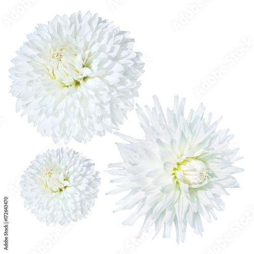 In de dag Dahlia white dahlia flower