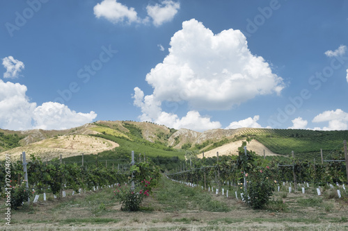 Summer landscape in Romagna (Italy)