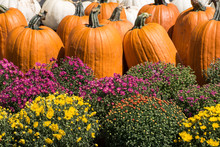 Orange And White Pumpkins With...