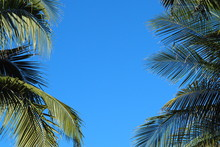 Palm Leaf With Blue Sky Background,copy Space.