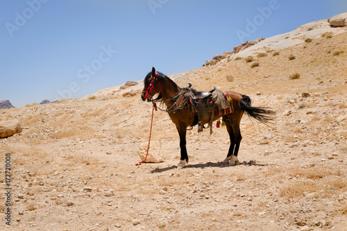 Poster de jardin Vache Saddled horse in Petra