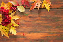 Autumn Maple Yellow Leaves And Berries On Wooden Background