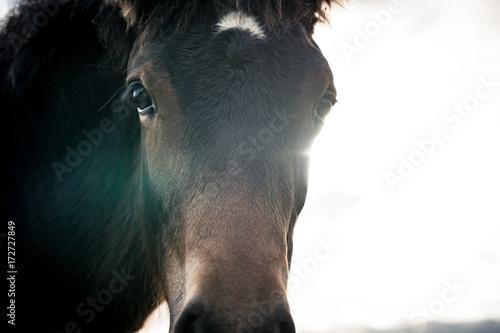Photo  Horses on a sunny day