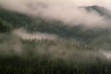Alaskan Rainforest. Low Hangin...