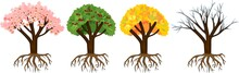 Tree At Four Seasons: Spring, Summer, Autumn, Winter Trees With Root System