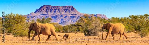 Foto op Canvas Olifant Wüstenelefanten