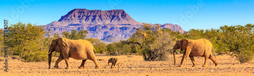 Poster Olifant Wüstenelefanten